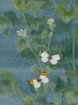 Garlic Mustard - detail by Lil Tudor-Craig. Environmental Artist in Lampeter Wales