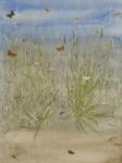 Ribwort Plantain postcard by Lil Tudor-Craig