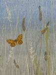 Ricbwort Plantain postcard by Lil Tudor-Craig
