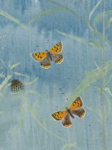 Black Knapweed, detail: Small Copper by Lil Tudor-Craig. Environmental Artist, Lampeter Wales