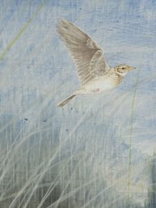 Marram, detail: Skylark by Lil Tudor-Craig. Environmental Artist in Lampeter Wales