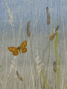 Ribwort Plantain - Wall Brown by Lil Tudor-Craig. Environmental Artist in Lampeter Wales