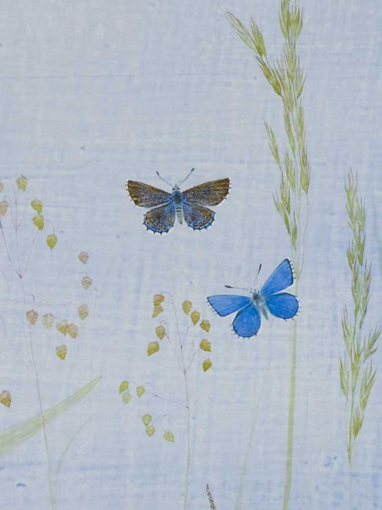 Itford Hill, detail: Adonis Blue by Lil Tudor-Craig. Environmental Artist, Lampeter Wales